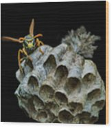 Head-on - Paper Wasp - Nest Wood Print