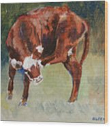 Head-scratching Heifer Pad Wood Print
