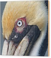 Headshot Brown Pelican Wood Print