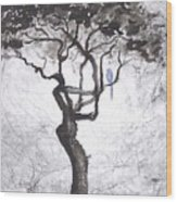 Healing Wood Print