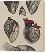 Heart, Anatomical Illustration, 1822 Wood Print