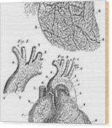 Heart Anatomy, Illustration, 1703 Wood Print