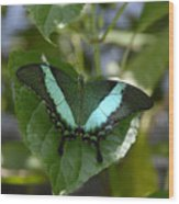 Heart Leaf Butterfly Wood Print