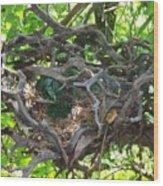 Heart-shaped Nest Wood Print