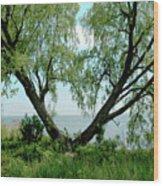Heart Tree On Lake Saint Clair Wood Print