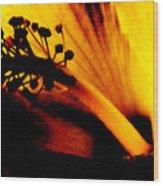 Heat Wood Print by Linda Shafer