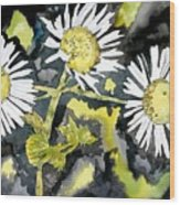 Heath Aster Flower Art Print Wood Print