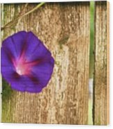 Heaven With Morning Glory Wood Print