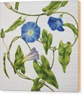 Heavenly Blue Morning Glory Wood Print