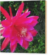 Heavenly Epiphyllum Orchid Cactus Wood Print
