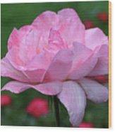 Heavenly Pink Rose Wood Print