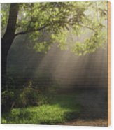 Heavenly Rays Wood Print