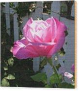 Heavenly Rose Wood Print