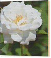 Heavenly White Rose Wood Print