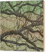 Hedge 3 Wood Print