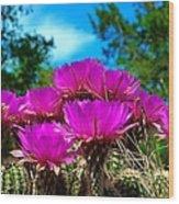 Hedgehog Cactus Wood Print