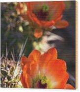 Hedgehog Flowers In Dawn's Early Light  Wood Print