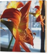Heirloom Amaryllis  Wood Print