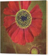 Helenium Beauty Wood Print