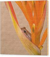 Heliconia And Frog Wood Print