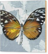 Heliconia Butterfly Wood Print
