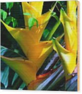 Heliconia Caribea Gold Wood Print