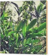 Heliconia Cluster Wood Print