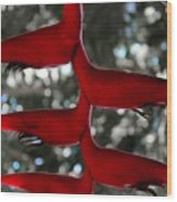 Heliconia Flowering Plant Wood Print