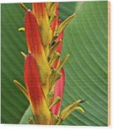 Heliconia Wood Print