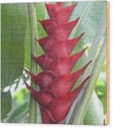 Heliconia Hot Flash Wood Print