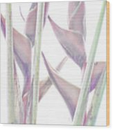 Heliconia Series - Image 1 Wood Print