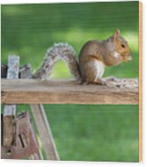 Hello Are You Gonna Eat All That? Chipmunk And Squirrel Wood Print