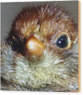 Hello Chick Wood Print