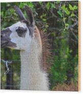 Hello Llama Wood Print