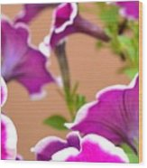 Hello Petunia Wood Print