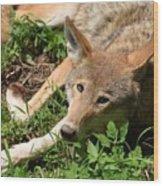 Hello Wolf Wood Print