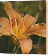 Hemerocallis Fulva Wood Print