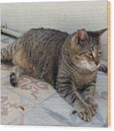 Hemingway Polydactyl Cat Wood Print