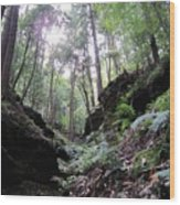 Hemlock Gorge Wood Print