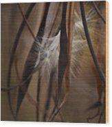 Hemp Dogbane Seeds Wood Print