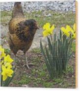 Hen And Daffodils Wood Print