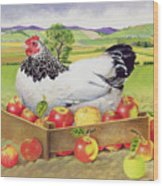 Hen In A Box Of Apples Wood Print by EB Watts