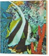 Heniochus Butterfly Wood Print
