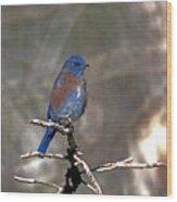 Henrys Western Bluebird Wood Print