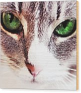 Her Emerald Eyes. Kitty Time Wood Print