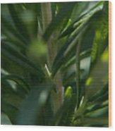 Herb #5 Wood Print