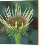 Herbaceous Beginning Wood Print