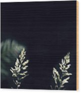 Herbs In Light With Fern Wood Print
