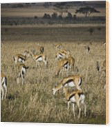 Herd Of Antelope Wood Print by Darcy Michaelchuk