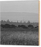 Herd Of Bison Grazing Panorama Bw Wood Print